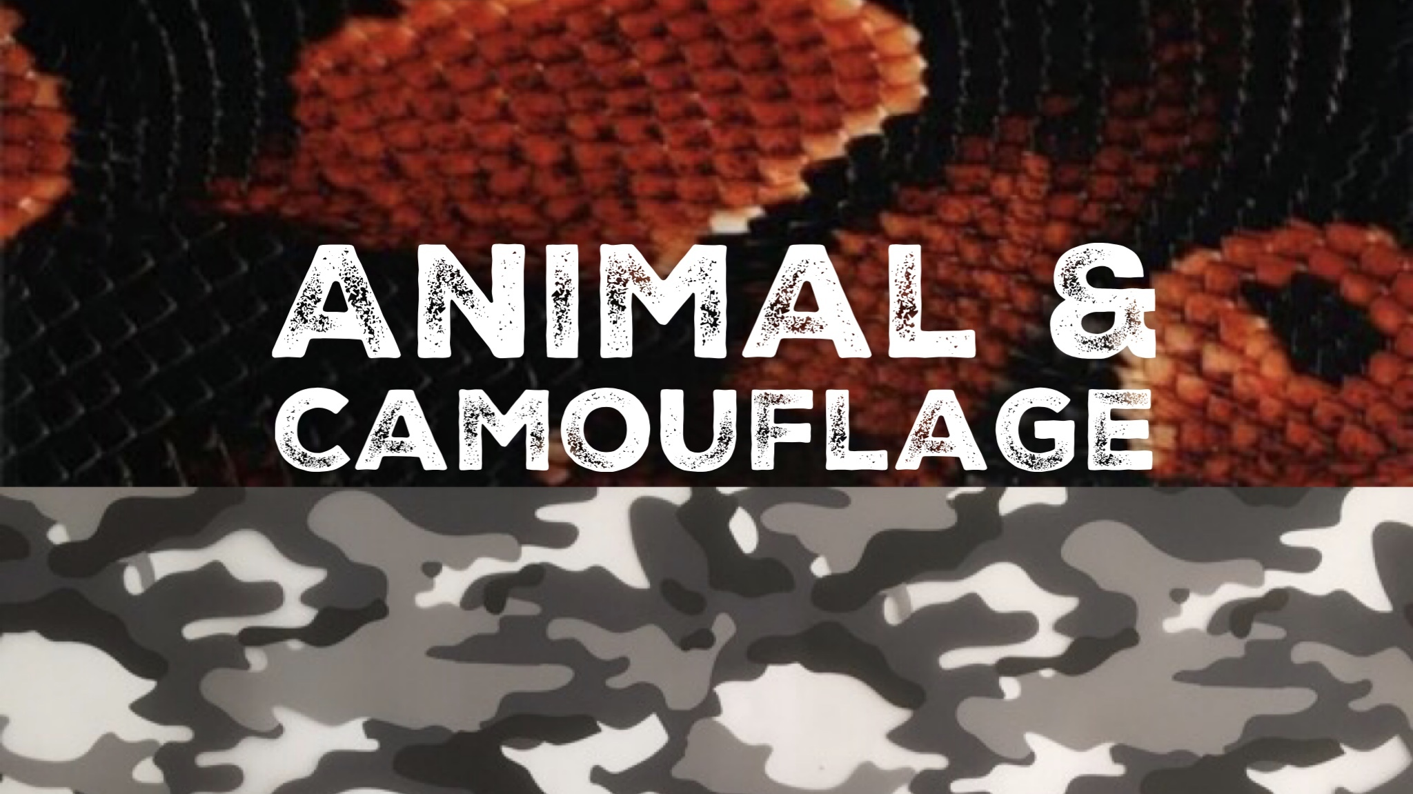 Animal_and_Camouflage
